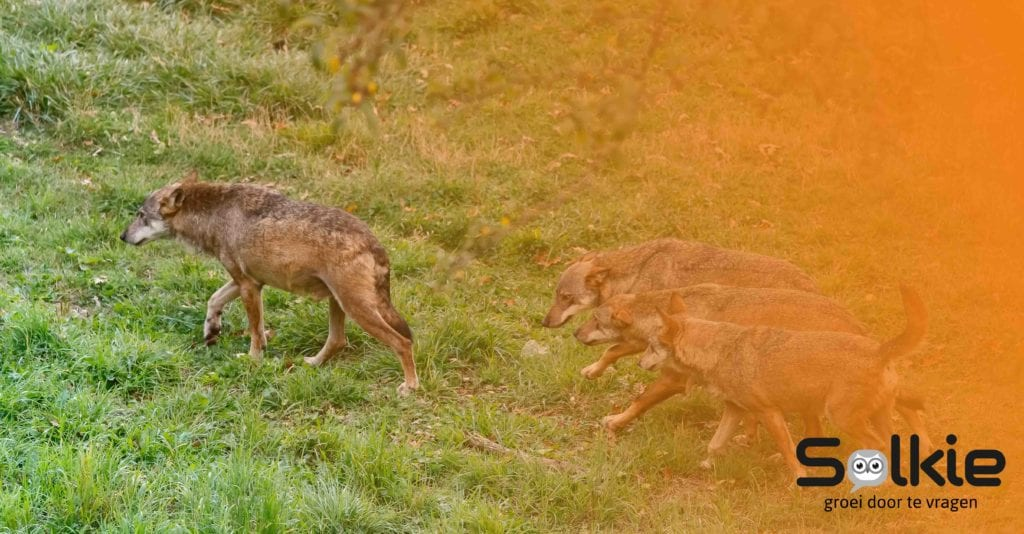 Geef leiding aan het dierlijke, Solkie, Groei door te vragen, Gastblog Amber Rookus